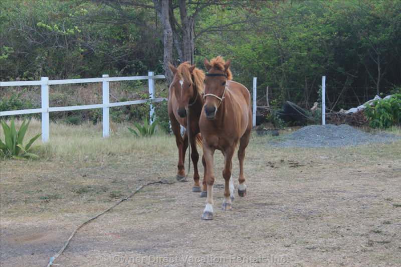 Great Horseback Riding, with an Amazing Trail Right on the Atlantic Shore  5 Minutes Away
