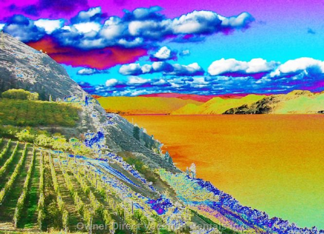 Evening Picture - a Colorful Picture of the Lake with the Sun Shining and the Vineyard.