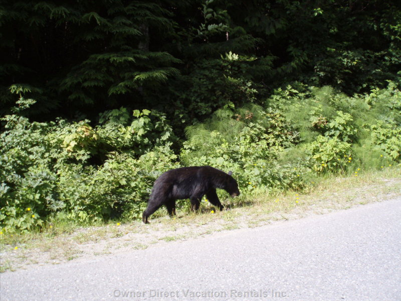 Wildlife and Nature in Beautiful BC!