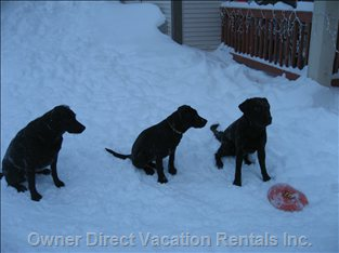 Dog Friendly. Can Play with Dogs in Snow Right from Condo Deck/Doorstep!
