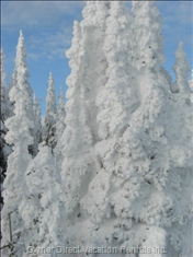 Famous Snow Ghosts - this is what Happens after Lots of Snow and Hoer Frost!