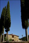 Tuscan Typical Cypress