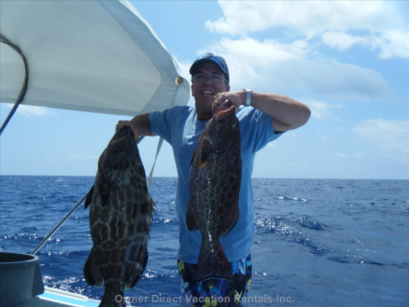 Black Groupers