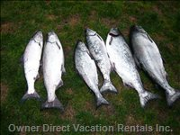 Salmon Caught 10mins Away on Port Alberni Inlet - you Can Charter a Boat There.  each Boat Can Hold up to 6 People
