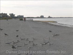 A Peaceful Walk in the Early Morning on St. Pete Beach  (the Beach is Just over one Block from your Condo Door)