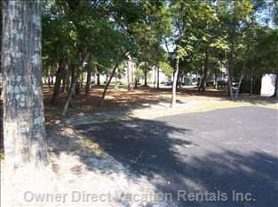 A Beautiful Natural Setting of Hardwood Trees and Pines on the Parking Side of the Condo