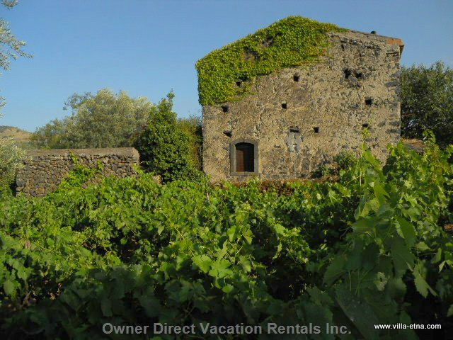 Villa in the Middle of its Own Vineyard