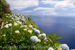 Hiking Will Bring you to the most Amazing Views.  The Flowers Grow Wild all over the Island.