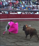 The Bull Have Velcro to Prevent Stabbing but the Men Still Have Very little to Protect them from the Bull.