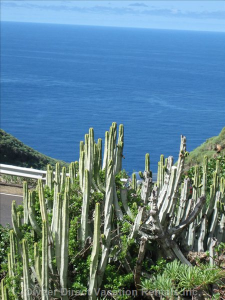Typical Island La Palma - Cactus Plants and the Ocean