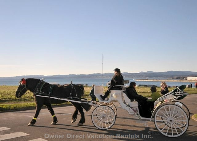 Horse-drawn carriage ride in Victoria, BC #206745