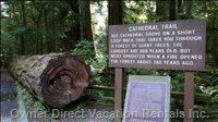 Be Sure to Stop at Cathedral Grove on your Drive to the Lodge.