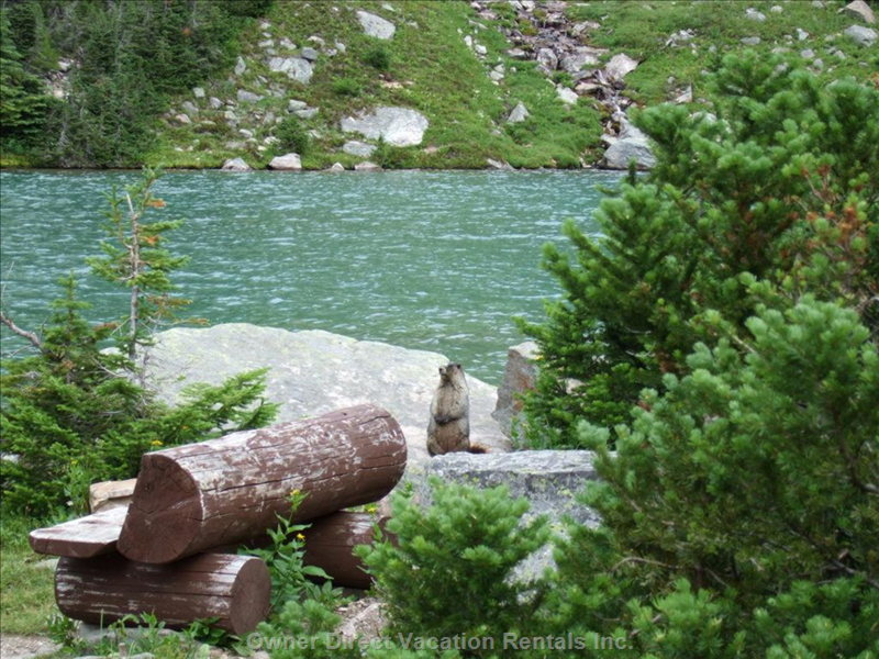 Great for Hikes to Mountain Lakes - There Are Numerous Hiking Opertunities.