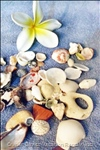 Beach Treasures Collected from Heywood Beach (a Favorite of our Guests. Beaches are Bountiful so we Can Suggest a New for each Day!
