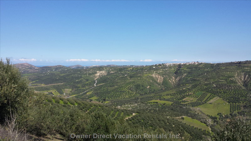 Olive Grove and Vineyards