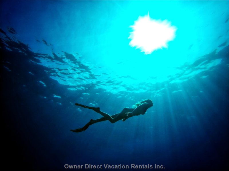 Diving in Kona (Clear Water).
