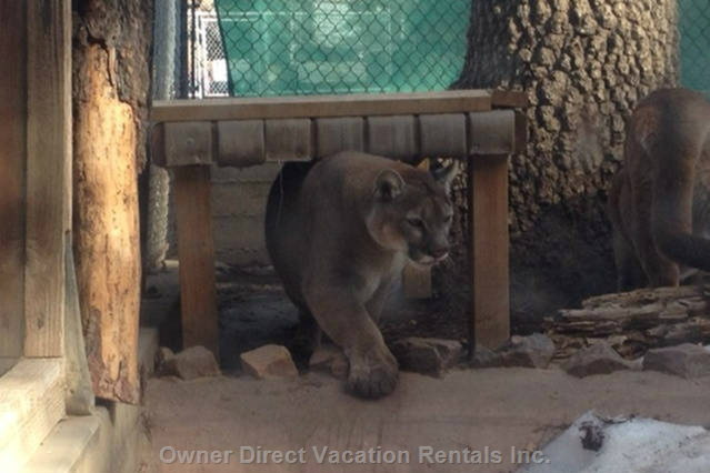 Big Bear Zoo Photos.