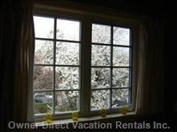 Plum Tree Blossoms from 2nd Bedroom