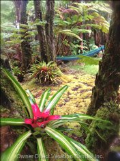 Bromeliads and Hammock