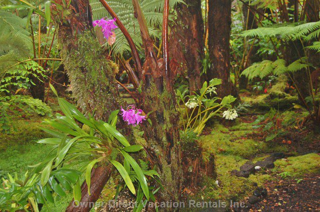 Hundreds of Orchids are Planted in the Tree Ferns