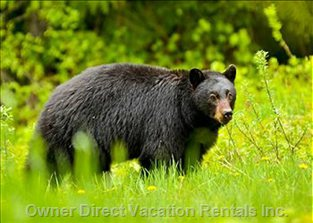 Just another Whistler Local. Bears are Really Cute but Please Don'T Feed them