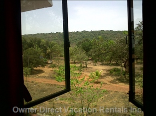 Mango Orchard View from Window