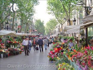 Ramblas Can be Reached on Foot, Cannot Miss it!
