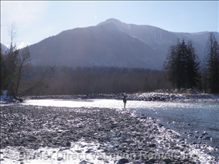 Vedder River - Winter-run Steelhead Fishing in Chilliwack is Chilly but Rewarding!