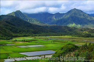 Hanalei Valley Outlook