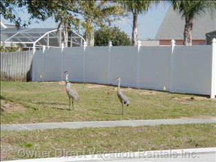 Meet the Neighbors- Sandhill Cranes outside of our Fence