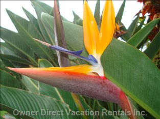 Beautiful Tropical Gardens - our Grounds at the Valley Isle Resort Are Full of Tropical Gardens.