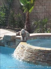 Our Pool Mascot, Lacey, in her Favorite Spot!