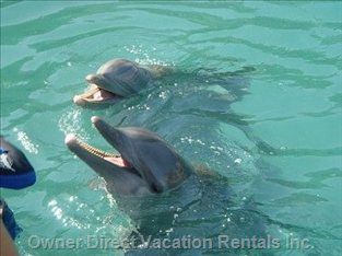 Swim with the Dolphins 5 Minutes Away
