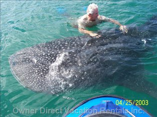 Come Swim with the Whale Sharks!