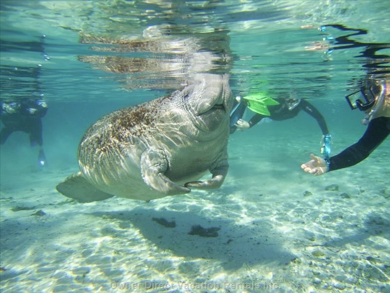 Snorkeling with the manatees and many other super fun activities while you stay in a 4-bedroom golf view villa