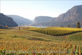 Vineyards in Okanagan Falls, BC