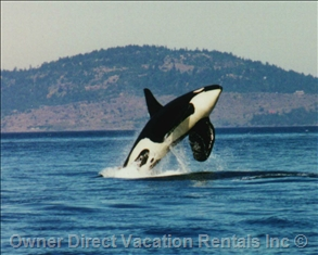 Whale Watching on South Vancouver Island, BC