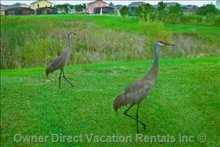 Wildlife in Clermont, FL