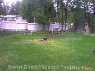 Deer in Yard from Kitchen Window